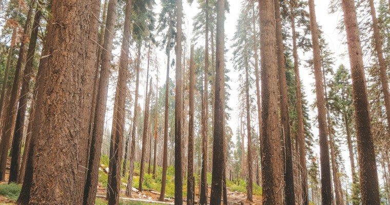 A Guide to Sequoia & King's Canyon National Parks