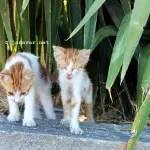 Reisen: Fotos von den Katzen auf Kos