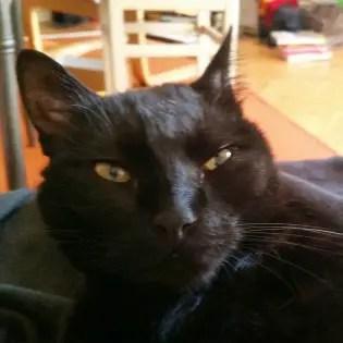 Black cat, Canavar