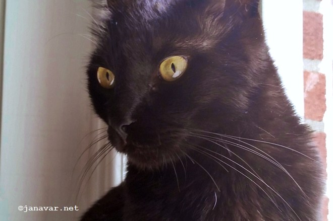 Black Cat Appreciation Day: 10 facts about Canavar