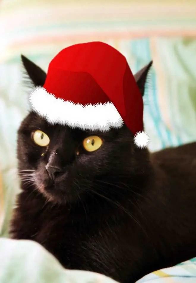 janavar-christmas-2016-cat-canavar-6