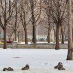 Travel: Things to Do in Montreal in Winter