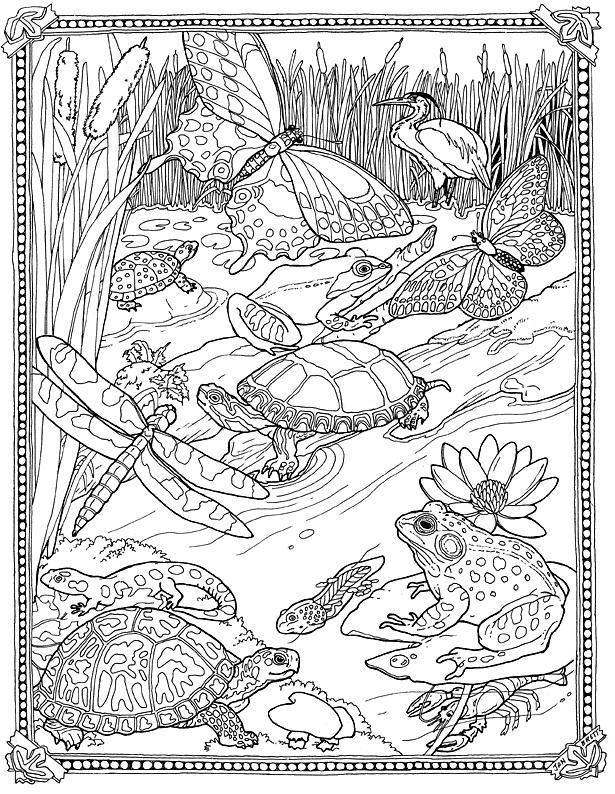 pond coloring page aaldtk