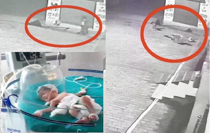 बच्ची और घटनास्थल पर मौजूद आवारा कु्त्ते।