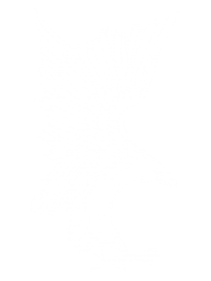 JanCoHawk-White Outline