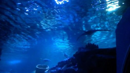SeaLife - Tržni centar Forum