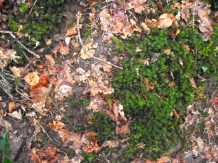 7 leaf and moss
