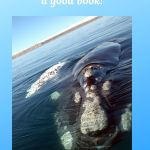 picture of land in the ocean and the words not every classic is a good book