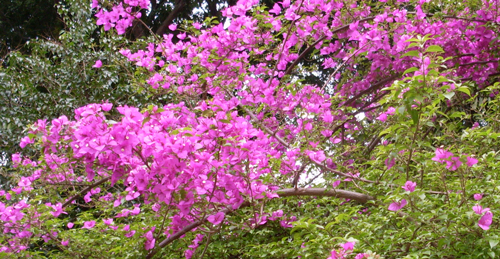 primavera_30set09