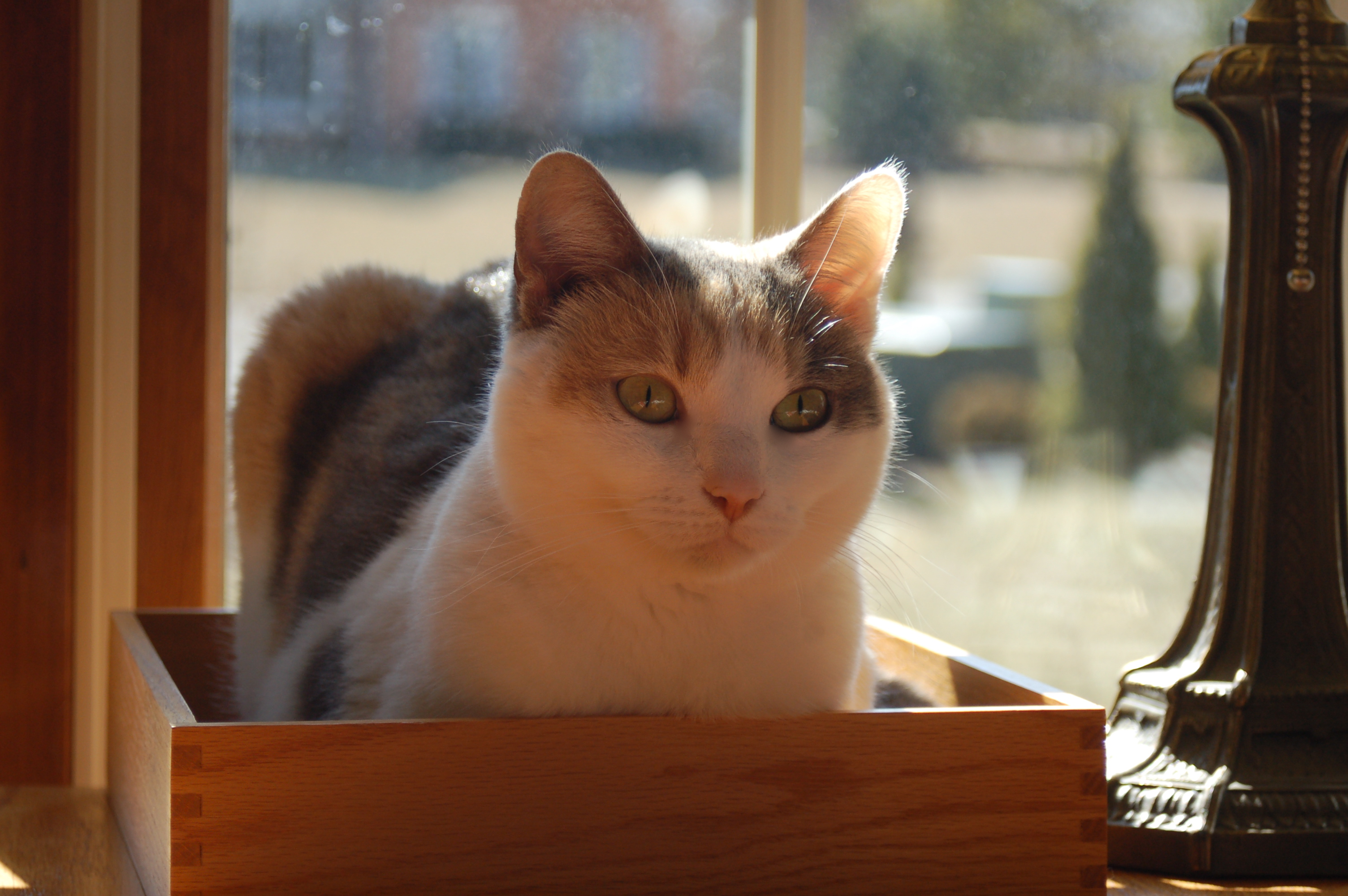 kitty in box