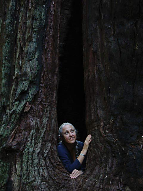 photo of Jan Edl in a tree