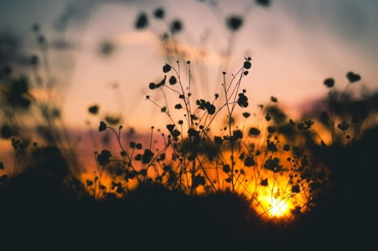 nature-sunset-flowers-silhouette-large