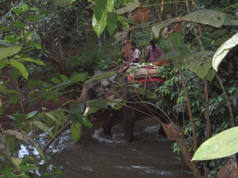 Elefant auf der Spice Farm