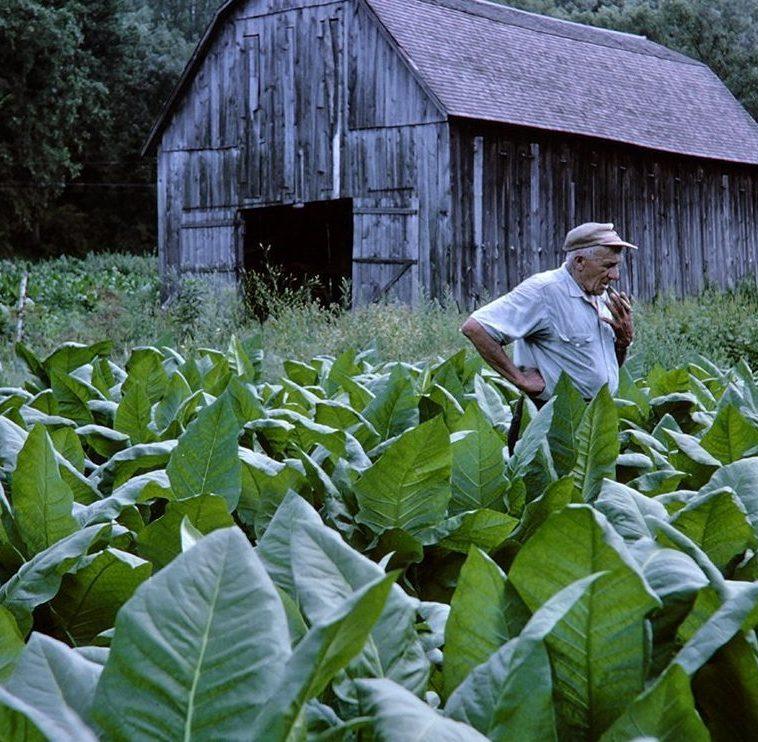 Tobacco Farmer and barn