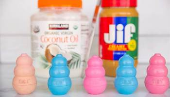 Photo of kong dog toys, peanut butter and coconut oil for dog treats to prevent smelly dog breath