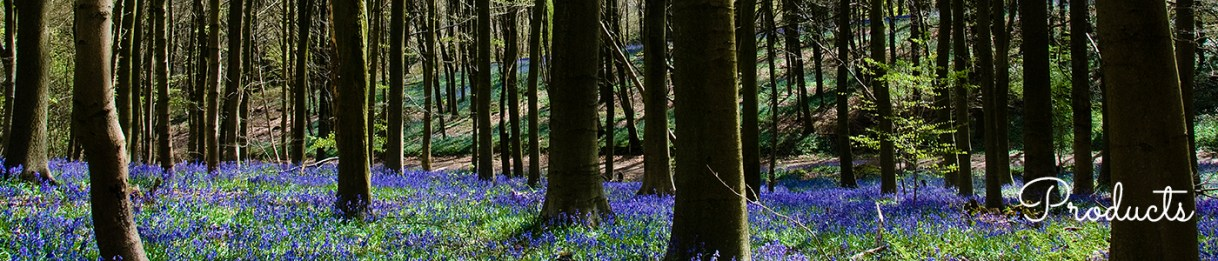 Photo of bluebell wood by Jane Mucklow, products page header image
