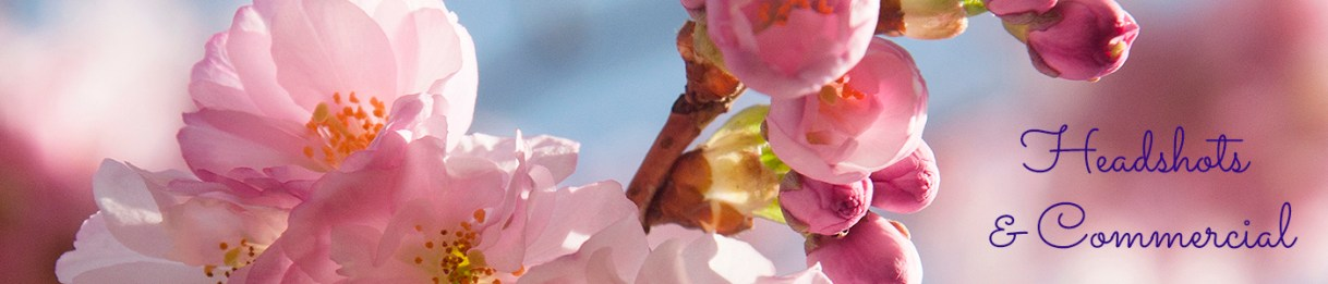 Pink cherry blossom on blue sky, commercial page header image by Jane Mucklow