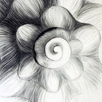 Shell Series, #3, charcoal, 24 x 24 inches, SOLD