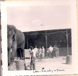 Filing elephants toenails