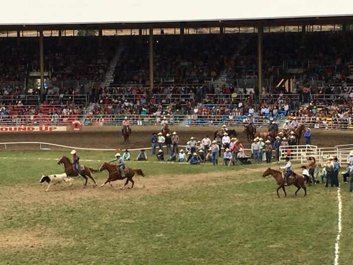 Steer wrestling Pendleton Round-Up rodeo grass arena