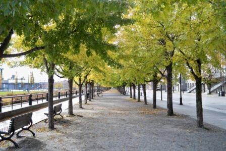 Tree-lined walkway Montreal train travel tips for Canada women travelers vacation