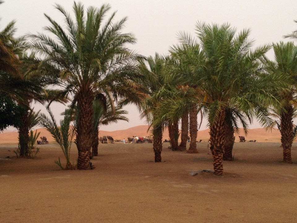 Sahara Desert in Morocco after a rare storm websites for planning a trip women who travel vacation