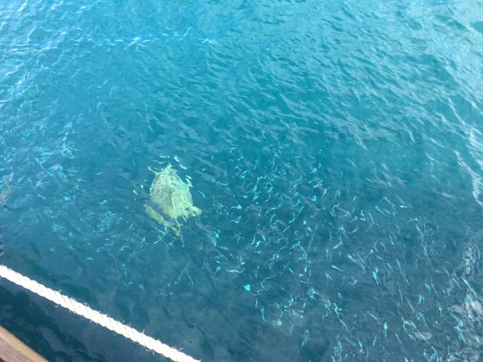 sea turtle Reefsleep Australia Great Barrier Reef vacation travel