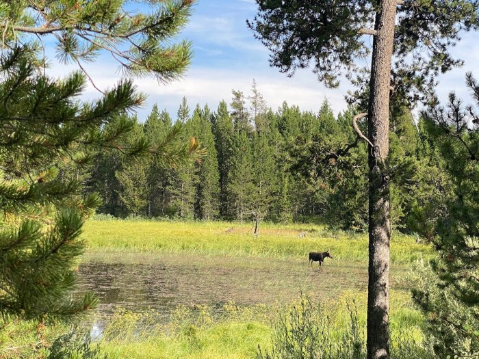 Moose at Harriman State Park