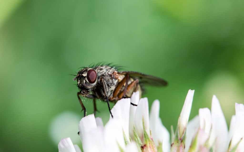animal blow flies bluebottles blur