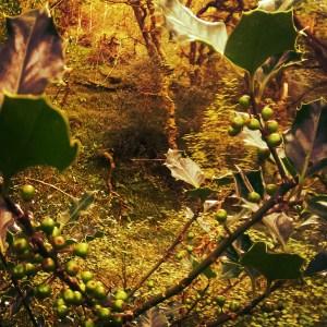 Hulva in Breen Wood