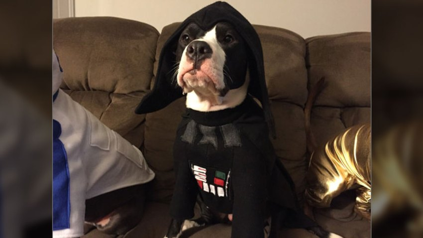 Darth Vader Pet Halloween Costume