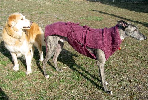 Crazy dog sweater for my Greyhound