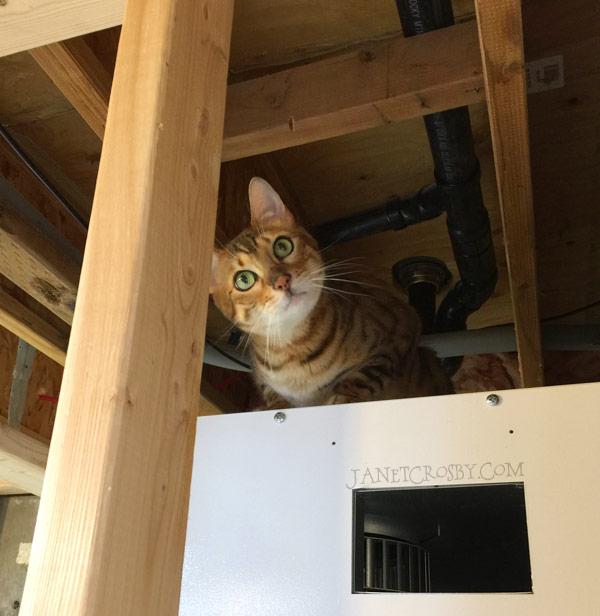 Quincy the Helper