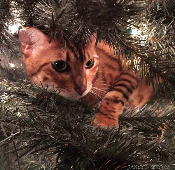 Quincy in the tree