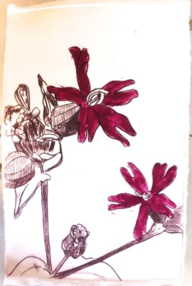 Ragged robin drypoint print with deep pink ink added with brush.