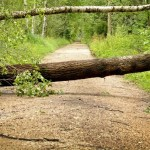 To symbolize not accessible: A photo of fallen trees blocking a dirt road