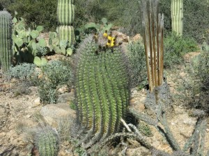 Thanks to http://www.keepthetalkgoing.com/cuddle-your-teen-even-if-hes-prickly/