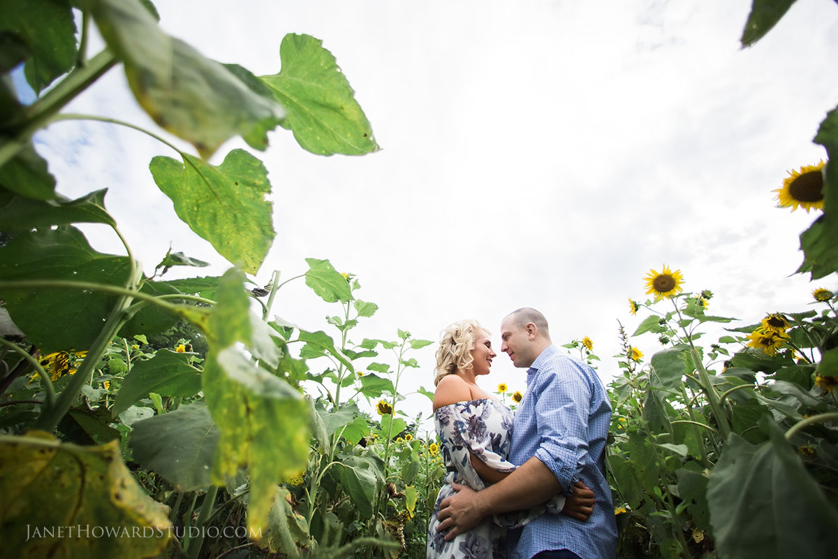 Sunflower field engagement photos