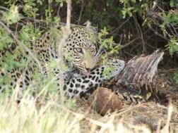 leopardgrooming
