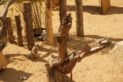 meerkat-zoo-tayto-park