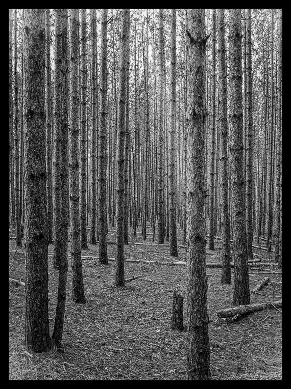 landscape, B+W, flora, trees