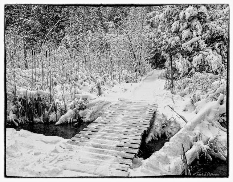 Winter, bridge, water, snow, trees, bullrushes.