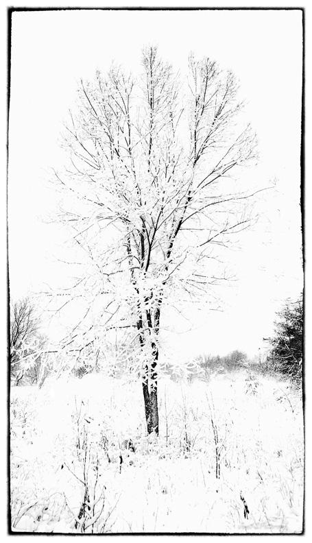 winter, trees, snow, B+W