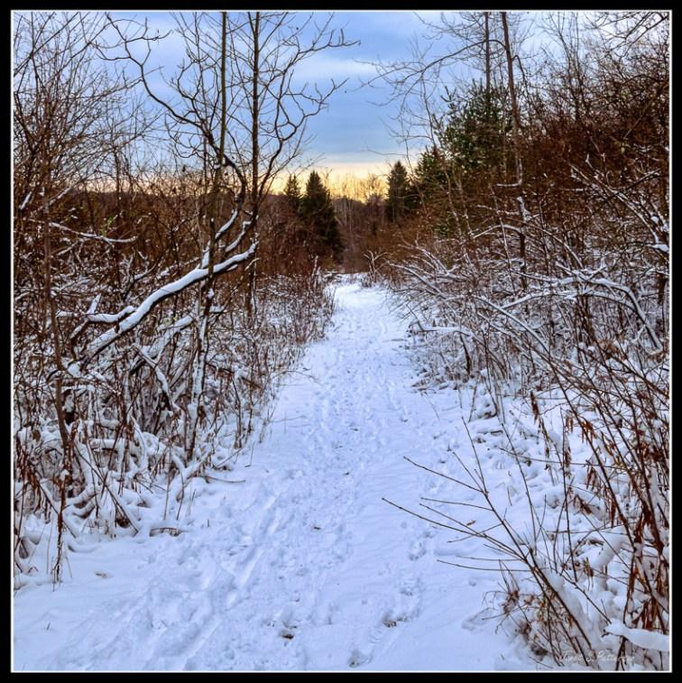 Winter, snow, trees, sunrise, sun, trail