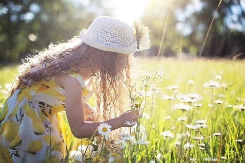 Girl in hat and sundress, picking daisies in a sunlit field.