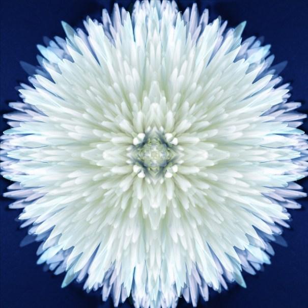 Backlit Petticoat Mum Mandala by Janet Towbin