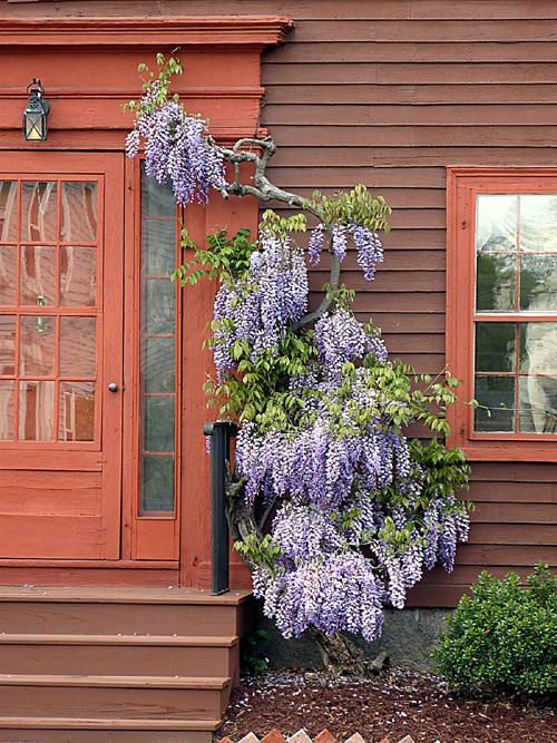 Old Doors & Old Flowers (3/3)