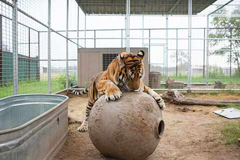 DO YOU LOVE CATS? HOW ABOUT REALLY BIG CATS?