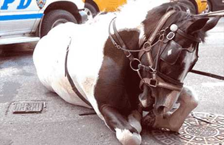 Horse Drawn Carriage Protest in NYC