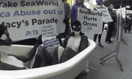 PROTESTORS SAY NO TO SEAWORLD!